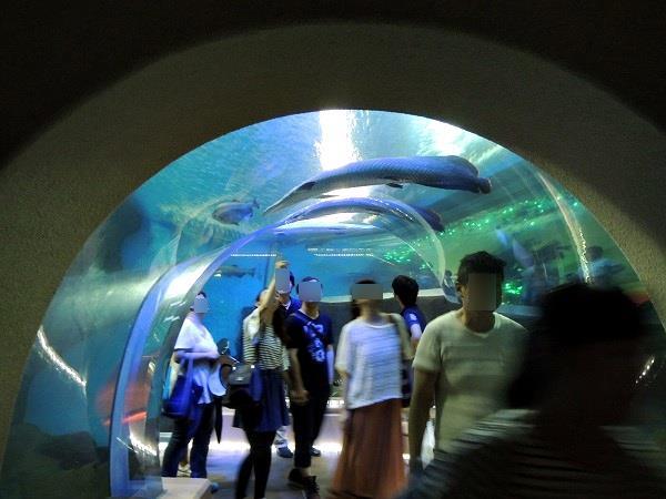 須磨水族館32