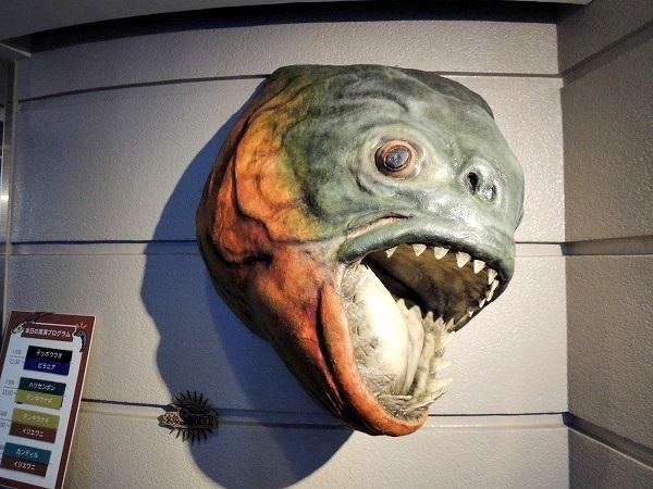 須磨水族館15