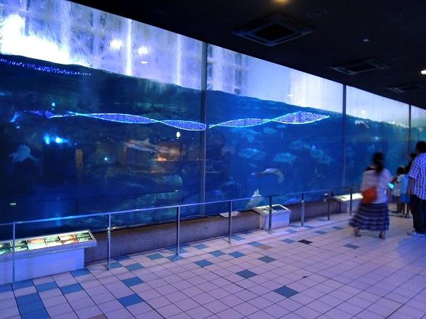 須磨水族館39