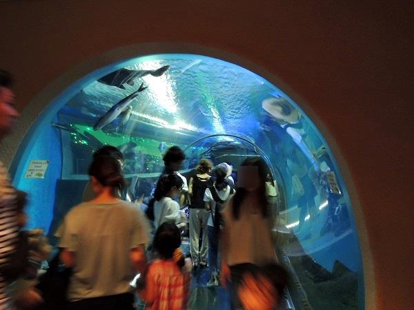 須磨水族館30