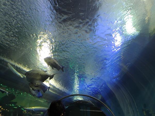 須磨水族館31