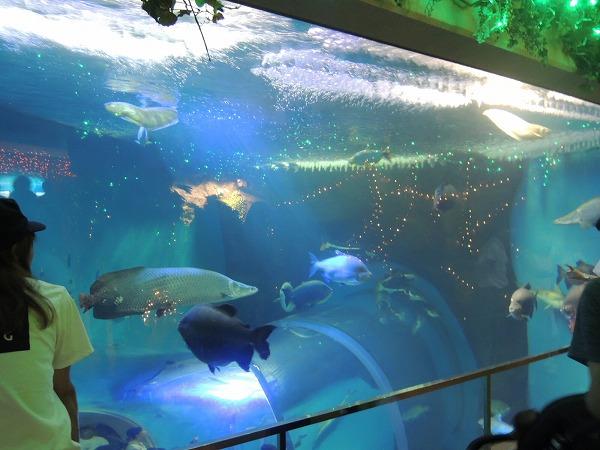 須磨水族館29