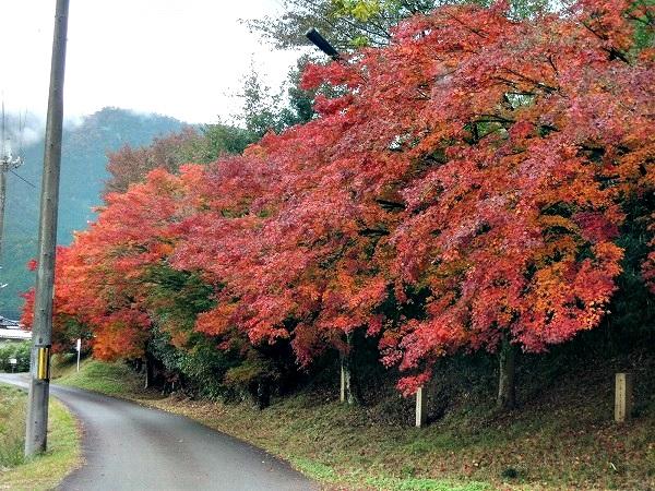 円通寺近くの紅葉
