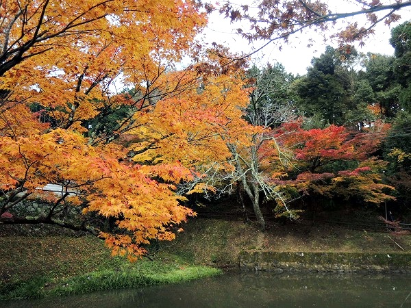 円通寺池の周囲紅葉
