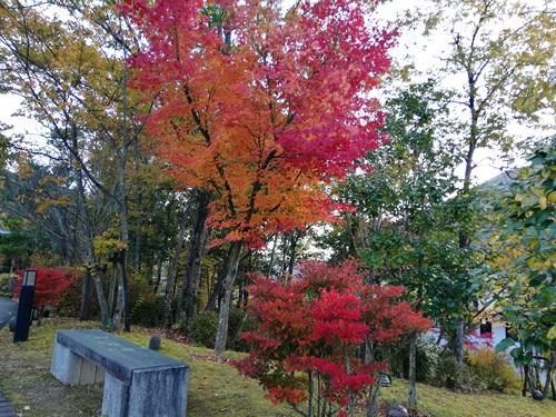 兵庫陶芸美術館の紅葉