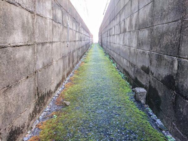 苔の生えたブロック塀
