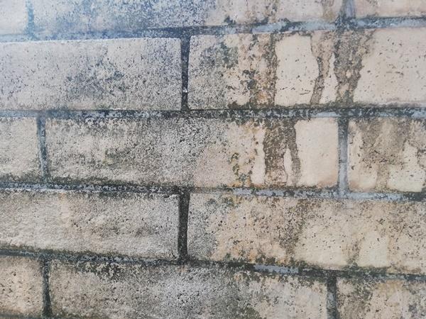 ブロック塀の黒カビと苔